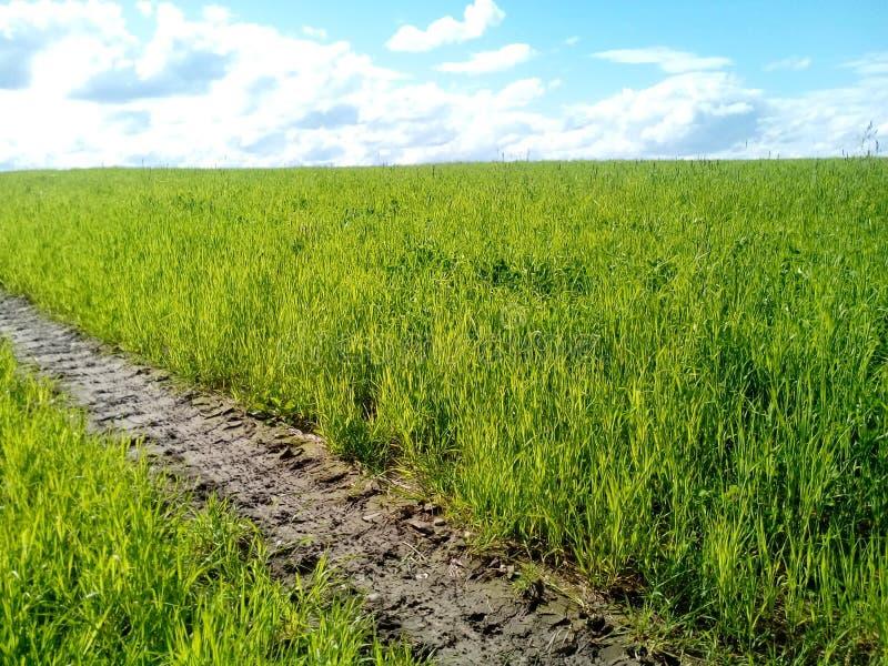 Fält med frodigt gräs och blåa himlar arkivbild