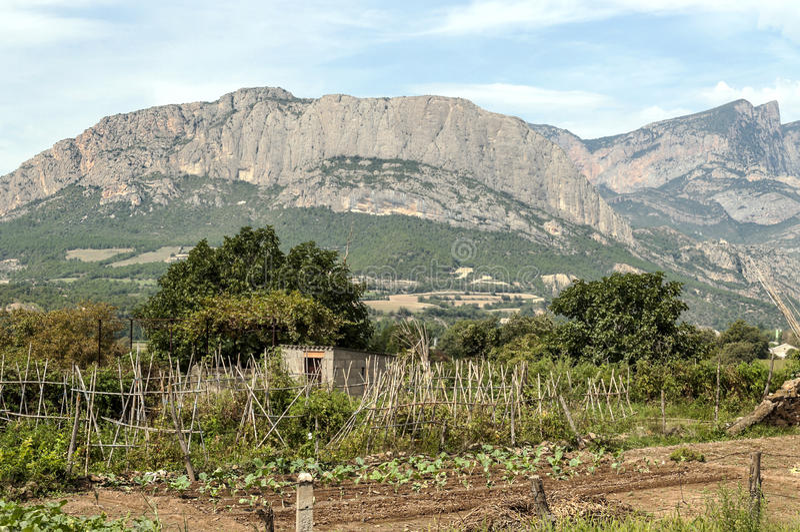 Fält med fruktträdgården royaltyfri fotografi