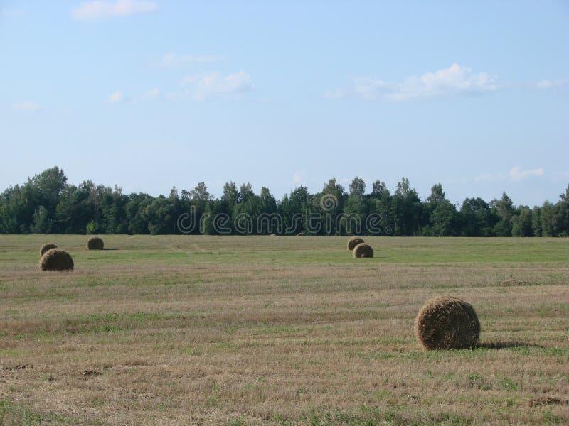 Fält med klippt gräs och hö i Vitryssland arkivfoton