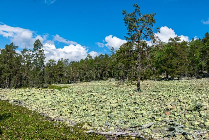 Fält med lappade stenar i Sverige arkivbild