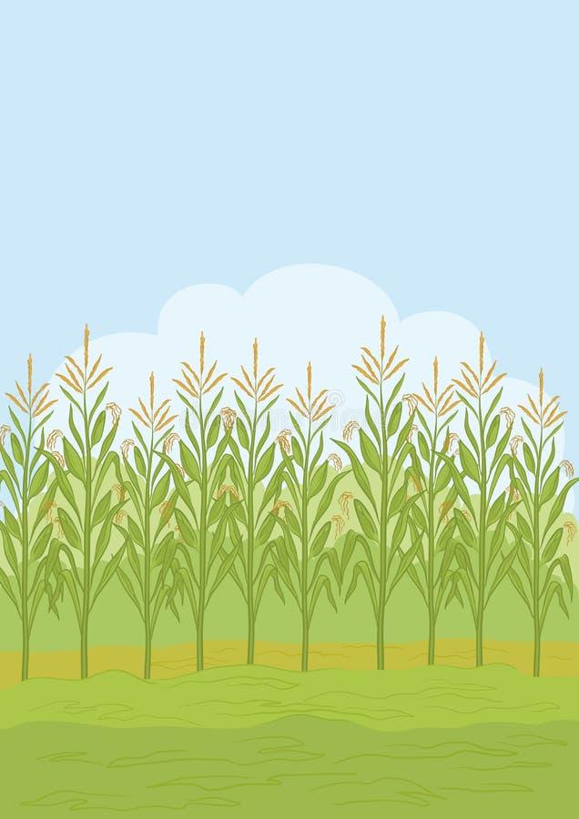 Fält med maize vektor illustrationer