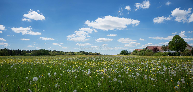 Fält med maskrosen och smörblommor på utkanten av staden arkivfoto