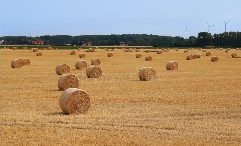 Fält med sugrörbaler efter skörd fotografering för bildbyråer