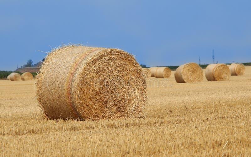 Fält med sugrörbaler efter skörd royaltyfri foto