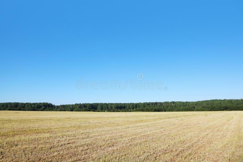 Fält med torrt gräs arkivfoton