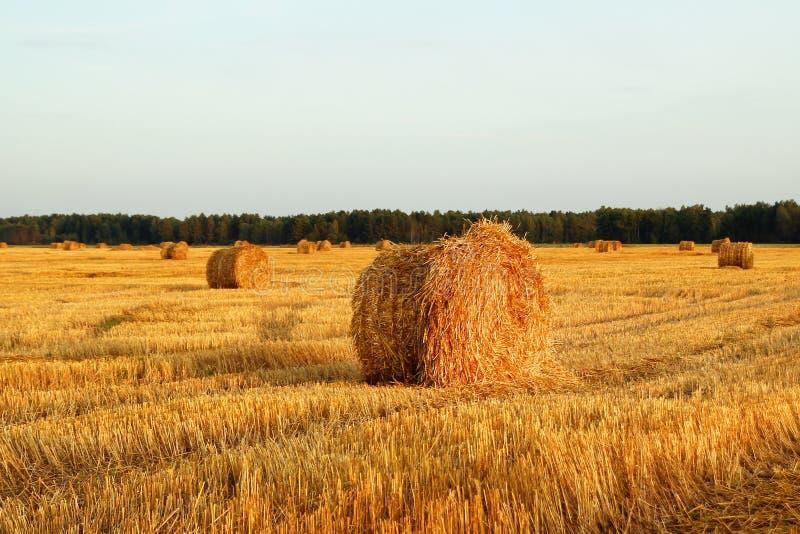 Fält med torrt gult gräs och höstackar på en solnedgång arkivfoto