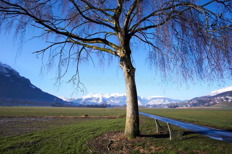Fält med trädet och berg med snö arkivbilder
