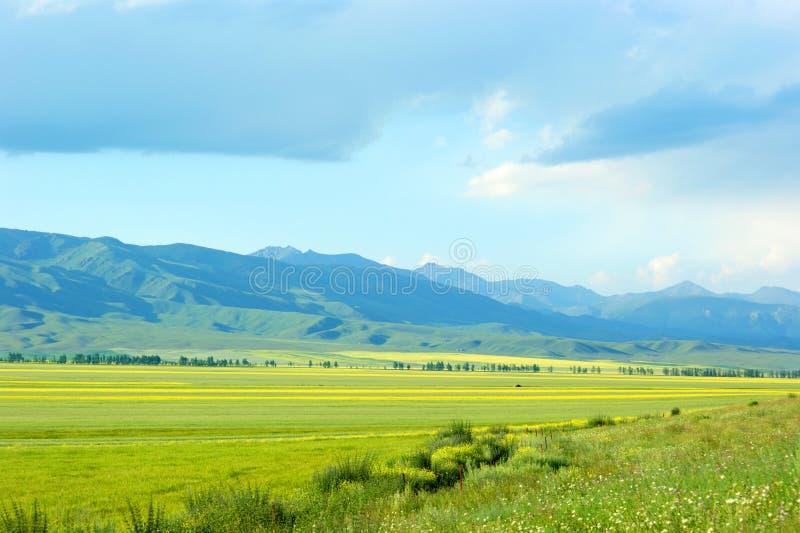 Fält och berg royaltyfri fotografi
