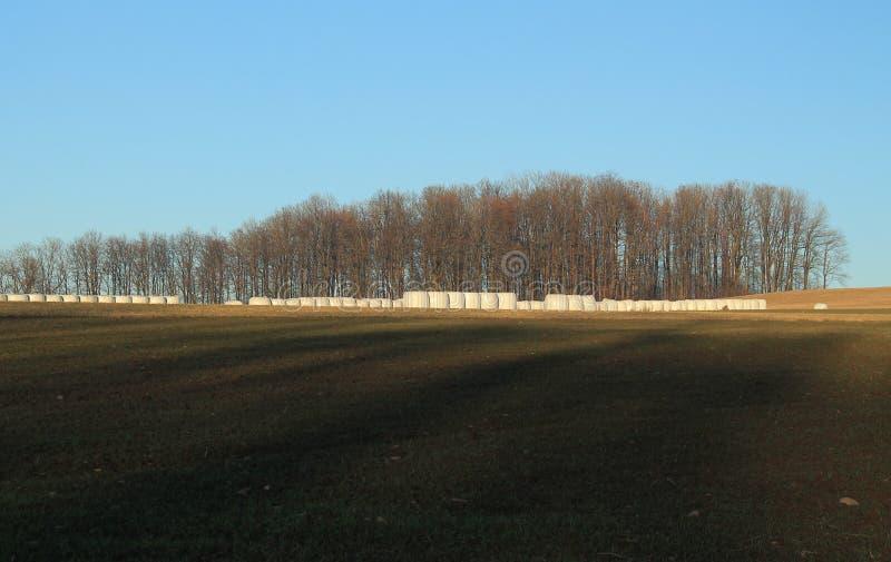 Fält och skog fotografering för bildbyråer