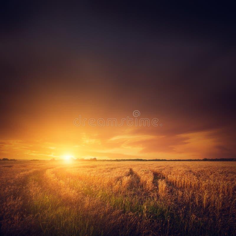 Fält och solnedgång, sommarlandskap royaltyfri foto