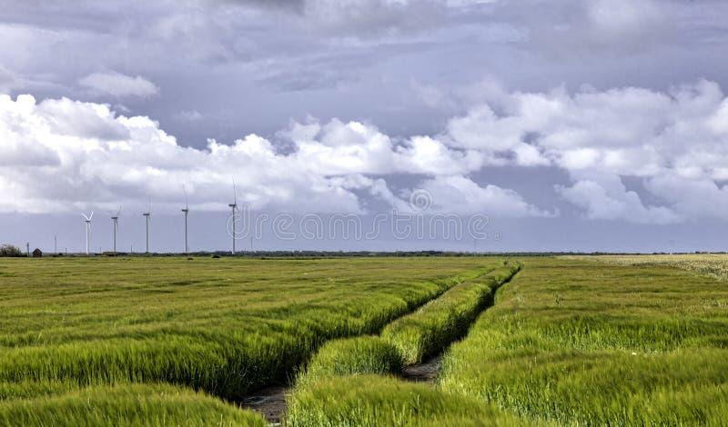 Fält och vindturbiner på den Stadil fjorden, Danmark royaltyfri bild