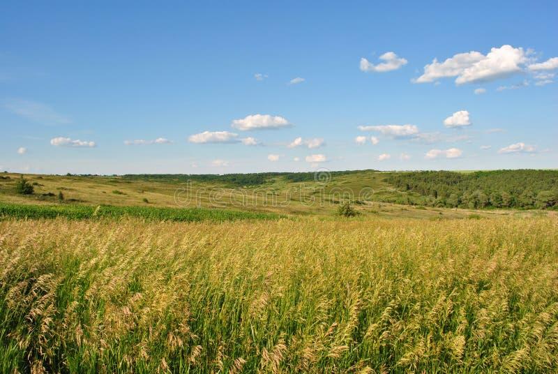Fält på de gröna kullarna, skogar i bakgrunden royaltyfri foto