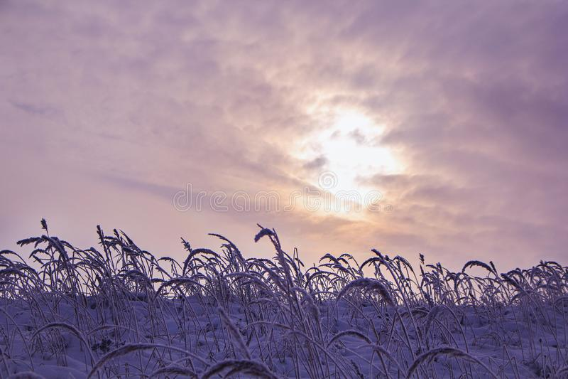 Fält på vintersäsongen royaltyfri bild