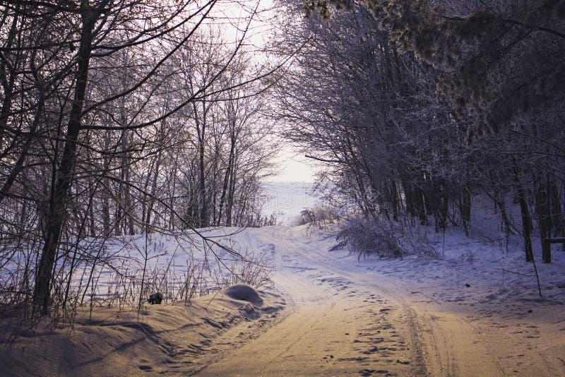 Fält på vintersäsongen royaltyfria foton