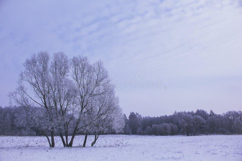 Fält på vintersäsongen royaltyfri foto