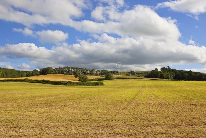fält skördat hö fotografering för bildbyråer
