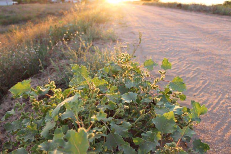 Fält Solnedgång Väg arkivfoto