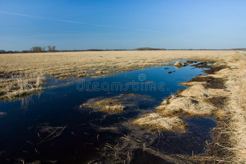 Fält som översvämmas med vatten arkivfoto