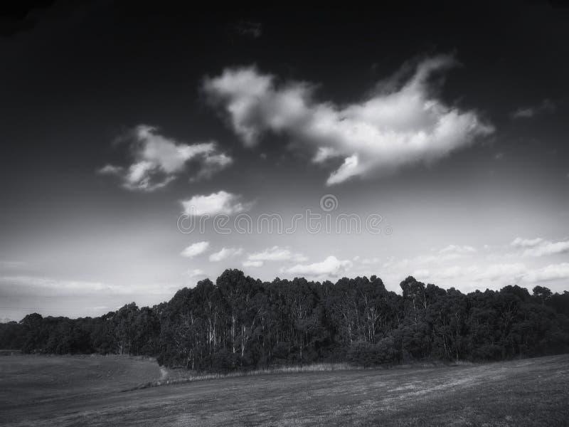 Fält, träd och himmel royaltyfri fotografi