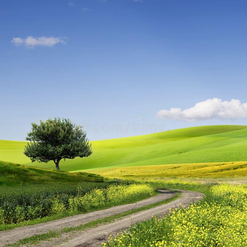 Fält, tree och blå sky royaltyfria foton