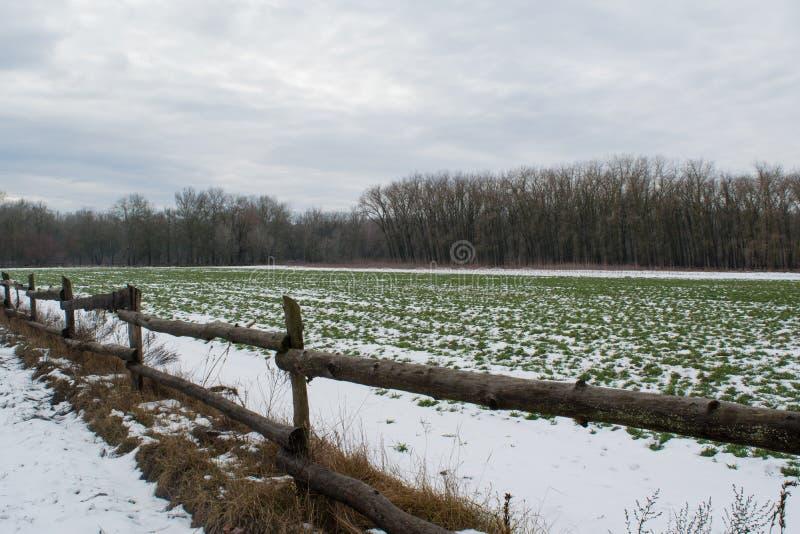 Fält under insnöade februari och trästaketet arkivbilder