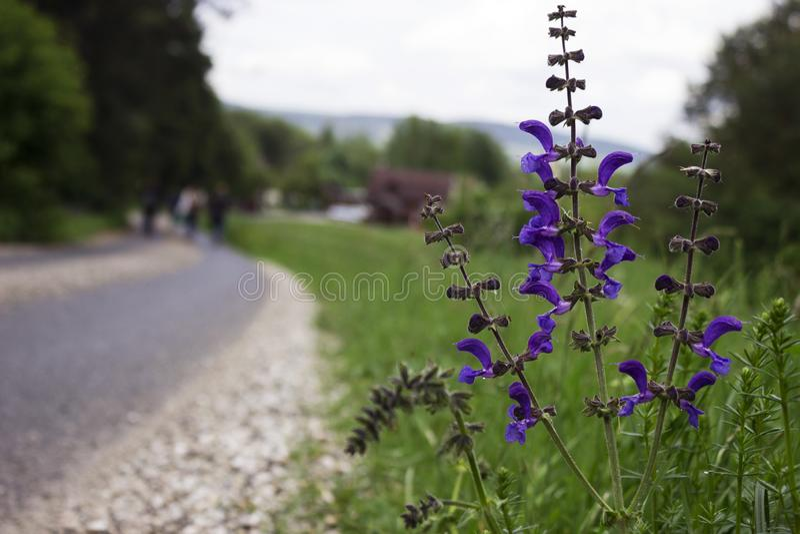 Fältblommor blommar nära den stenlade vägen, parkerar slovakiska Paradise, bakgrund royaltyfri foto