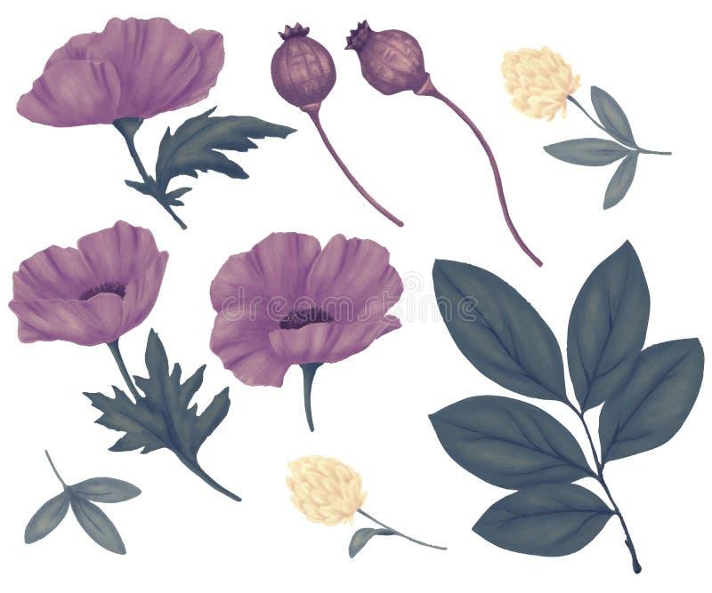 Fältblommor, lösa växter vektor illustrationer