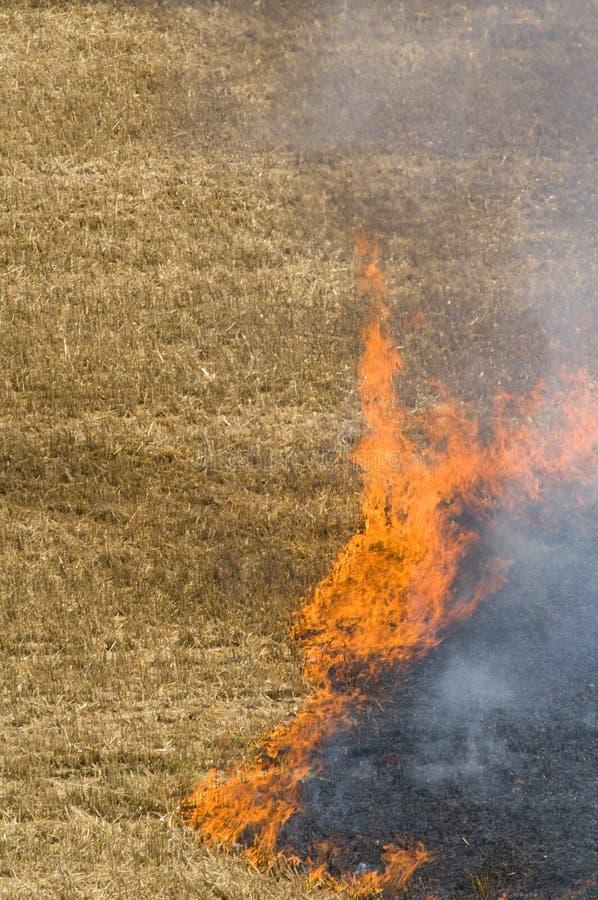 fältbrand arkivbild