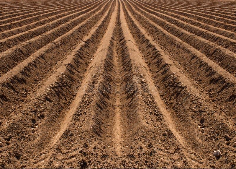 Fältet är förberett för att plantera, tidig vår arkivfoto