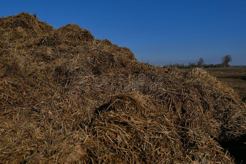 Fältet åkermark är förberett för att så skördar I bakgrunden plogar den långväga skogen, traktorer arkivbild