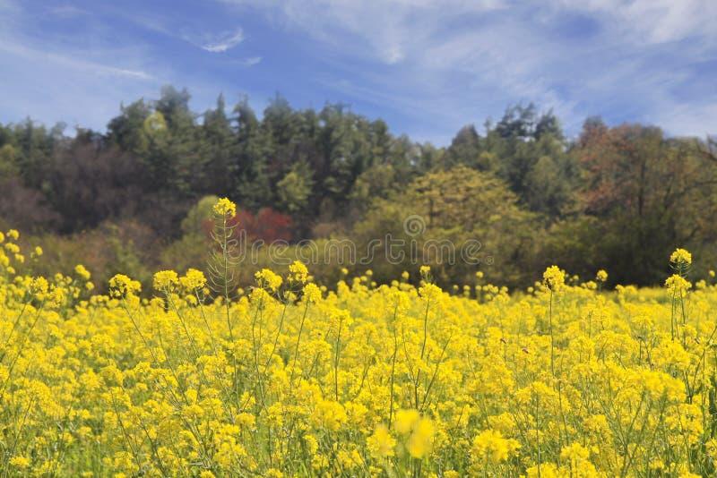 fältet blommar fjädern royaltyfri foto