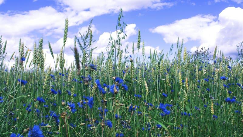fältet blommar full fotografering för bildbyråer