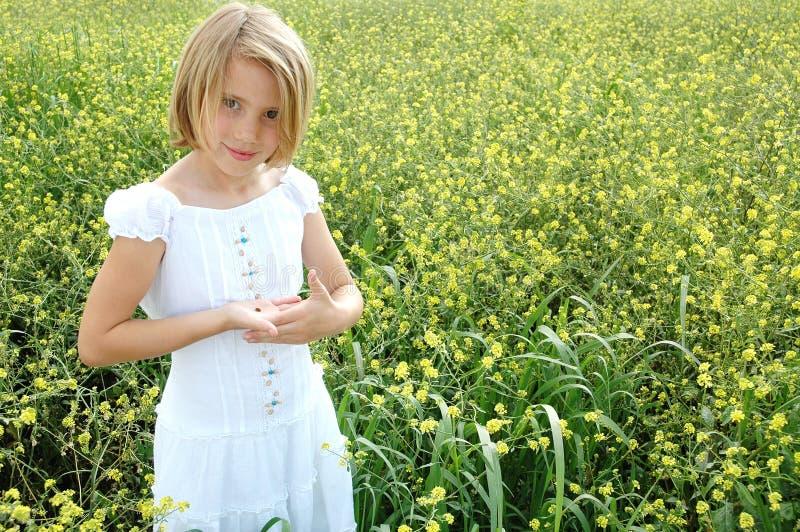 fältet blommar yellow fotografering för bildbyråer