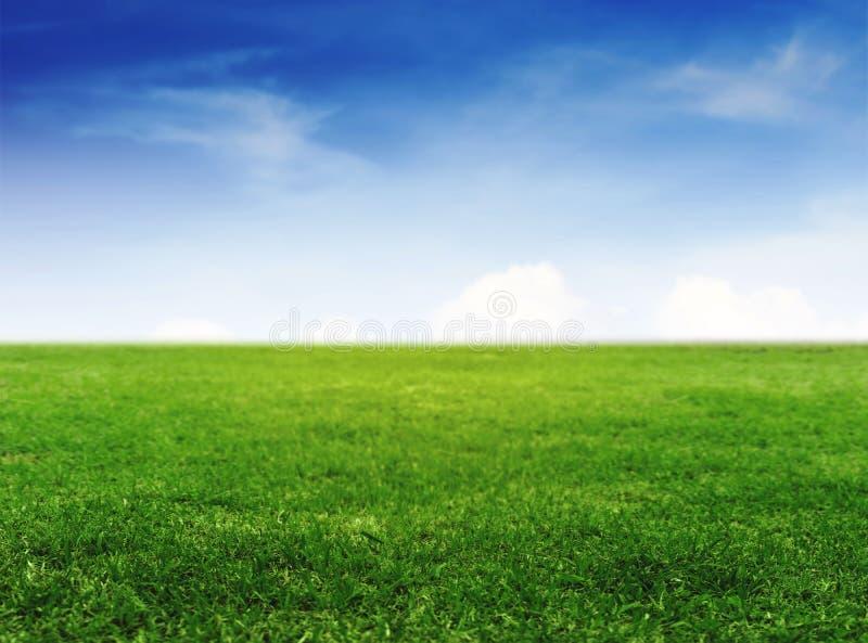 Fältet för grönt gräs under klar blå himmel och vit fördunklar royaltyfri bild