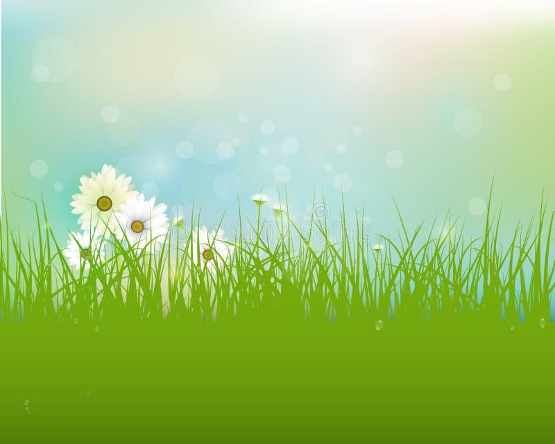 Fältet för vektorvårnaturen med grönt gräs, vita gerberatusenskönablommor och vatten tappar dagg på gröna sidor stock illustrationer