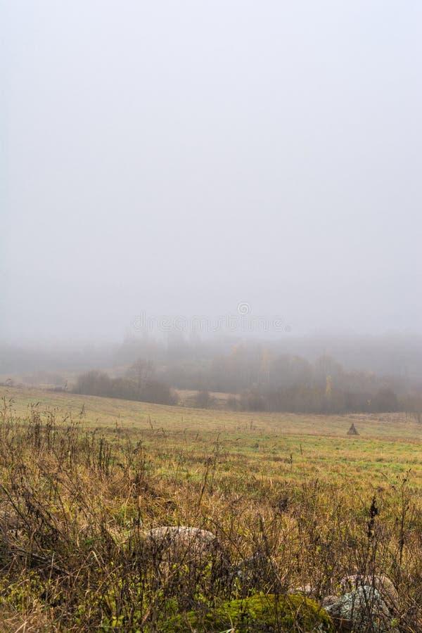 Fältet och kullar med torrt gräs och avel, skogen täckas med dimma, höstlandskap royaltyfria foton