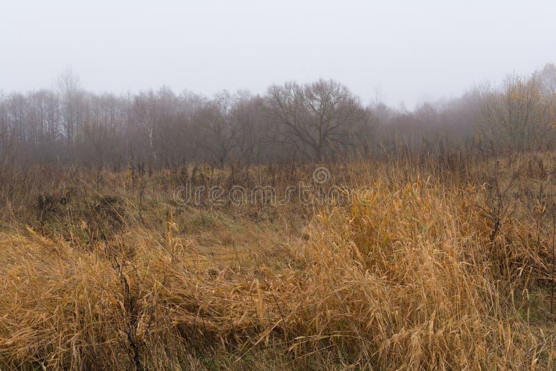 Fältet och kullar med torrt gräs och avel, skogen täckas med dimma, höstlandskap royaltyfri foto