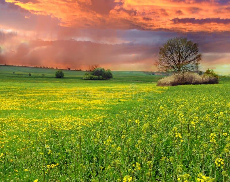 fältet våldtar solnedgång arkivfoton