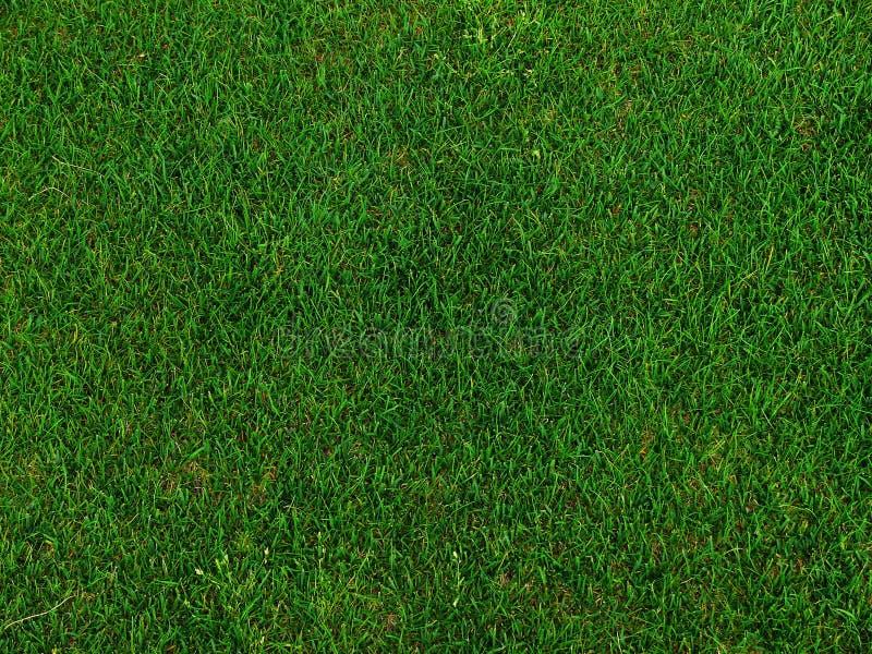 fältgolfgräs royaltyfria bilder