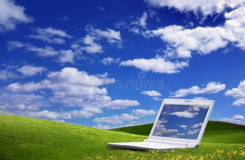 fältgreen fotografering för bildbyråer