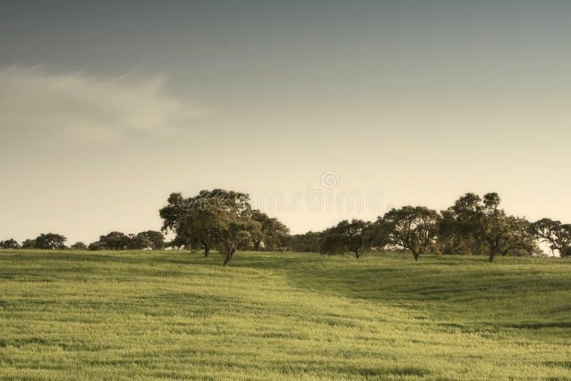 fältgreen royaltyfria foton