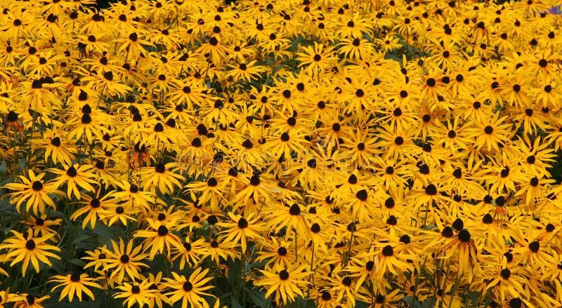 Download Fältguld fotografering för bildbyråer. Bild av blom, trädgårdsmästare - 512233
