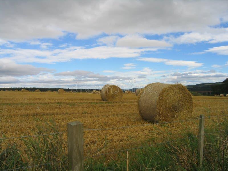 Download Fälthayrolls fotografering för bildbyråer. Bild av scotland - 237221