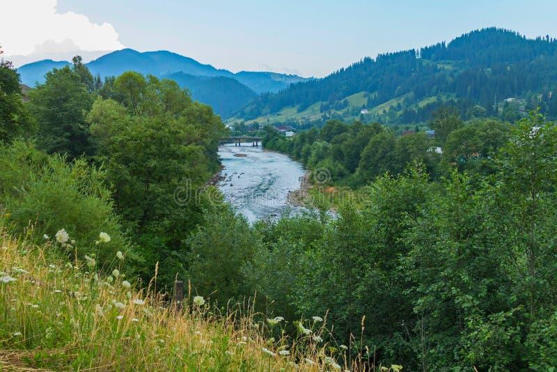 Fältkamomillar på den ensamma lutningen se floden nedanför och bergen i avståndet arkivbild