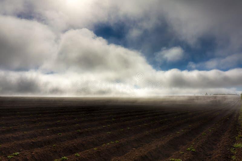 fältpotatis fotografering för bildbyråer