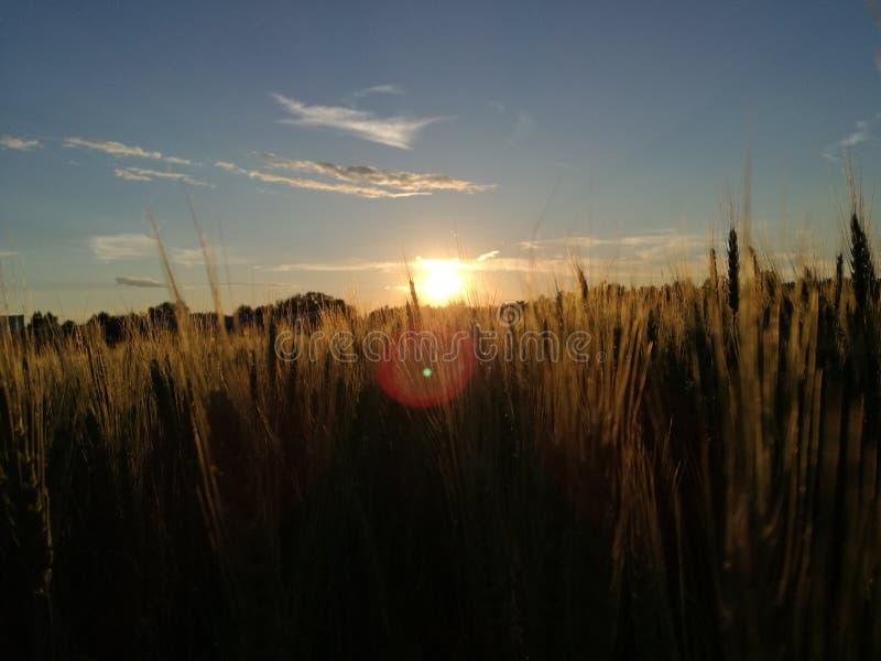 Fältsolnedgång fotografering för bildbyråer