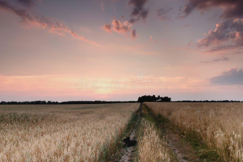 Fältväg i solnedgången arkivbild