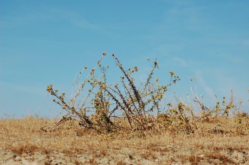 Download Fältweeds fotografering för bildbyråer. Bild av gräs, fält - 3547513