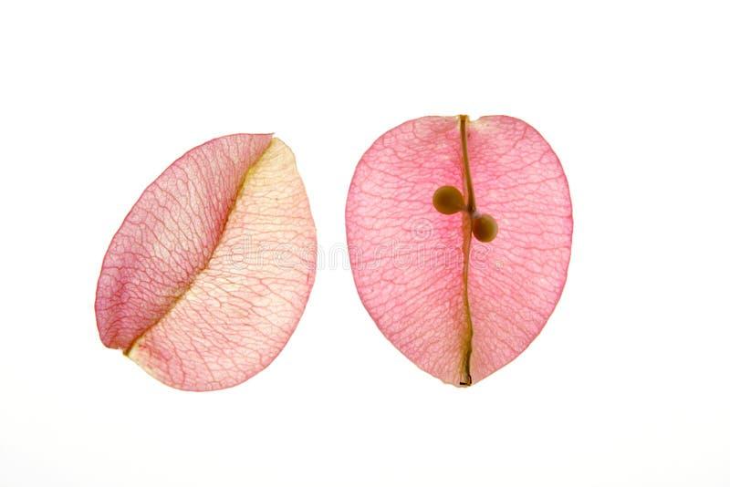 Färben Sie Blumen, Blätter, Blumenblätter, trennte Weißrückseite stockbild