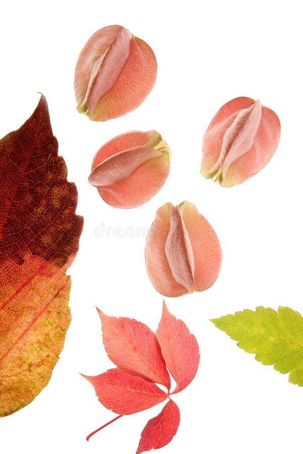 Färben Sie Blumen, Blätter, Blumenblätter, trennte Weißrückseite stockbilder